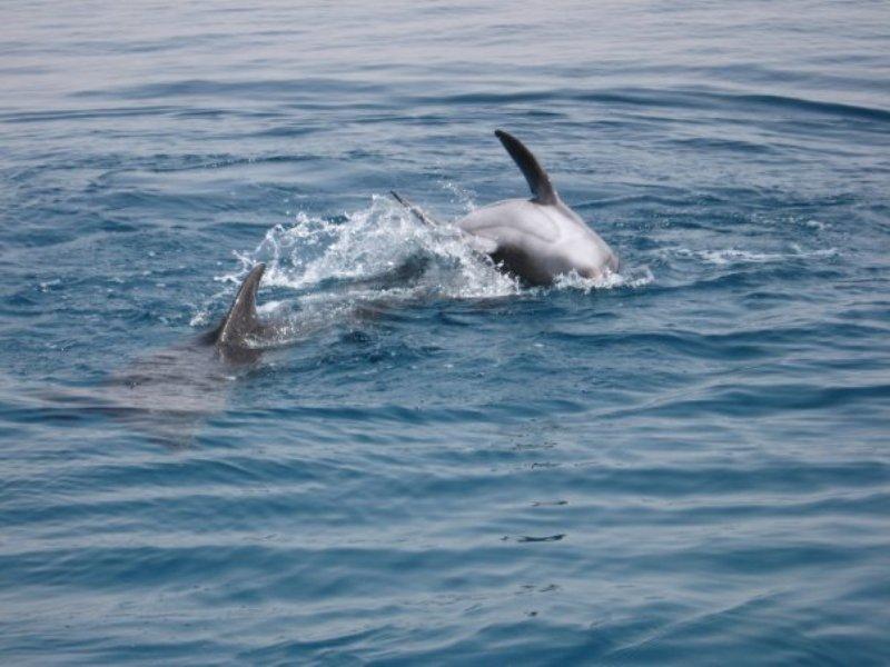 צפיה בדולפינים באילת
