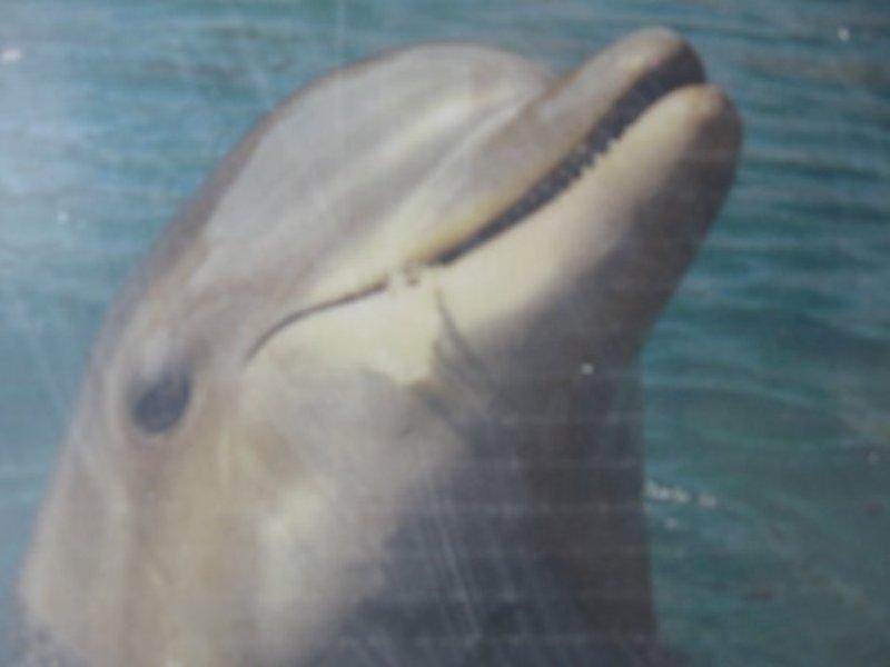 צפייה בדולפינים בים האדום