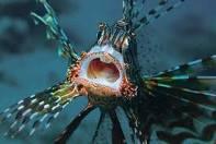 אוצרות טבע במפרץ אילת