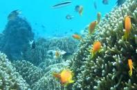 אוצרות טבע בים האדום